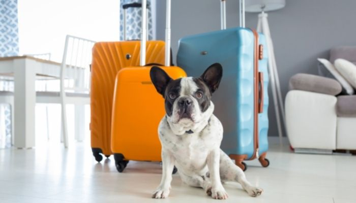 A Pet Owner's Guide To Taking a Vacation