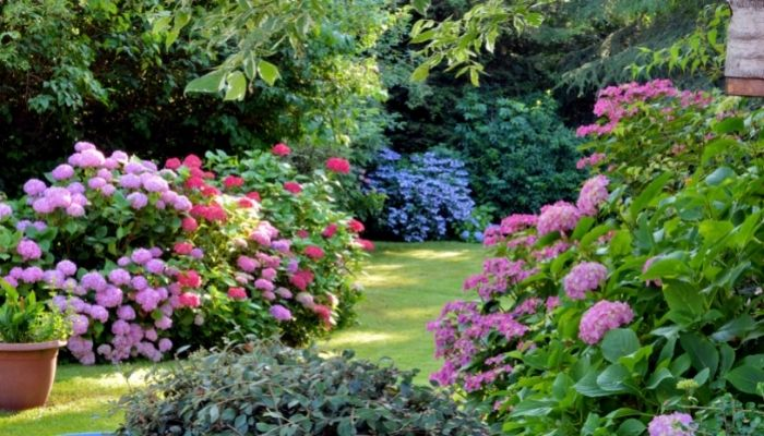Important Tips for Keeping Your Garden Healthy